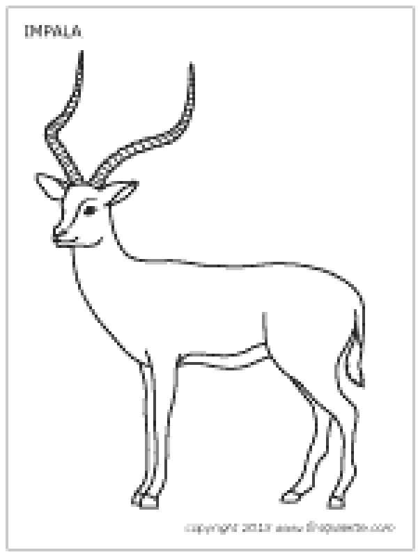 Impala coloring