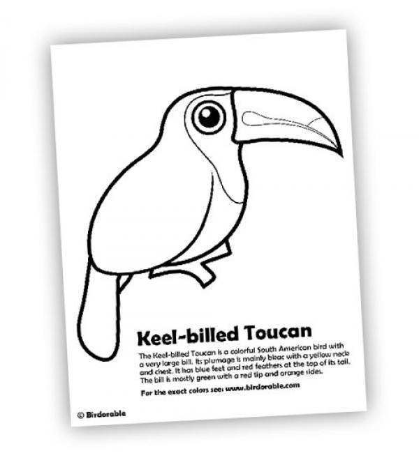 Keel-billed Toucan coloring
