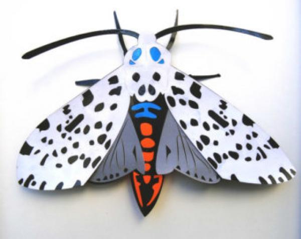 Leopard Moth clipart
