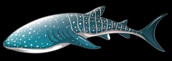 Leopard Shark clipart
