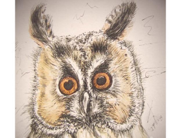 Long Eared Owl svg