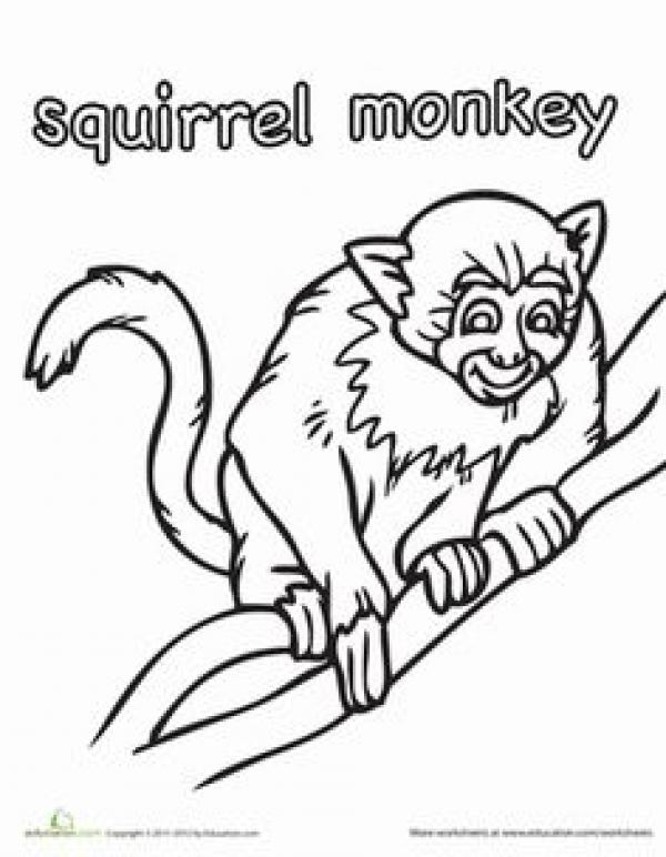 Squirrel Monkey coloring
