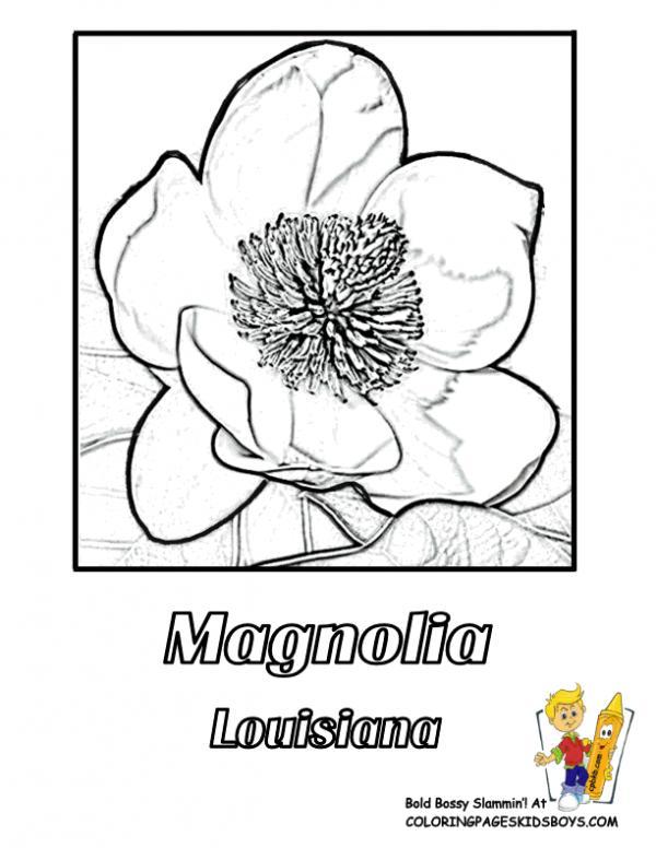 Magnolia Blossom coloring