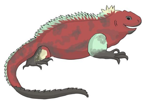 Marine Iguana clipart