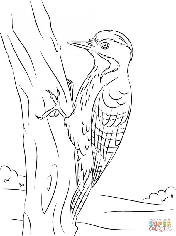 preview Woodpecker coloring