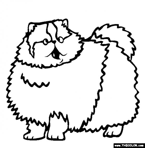 preview Persian Cat coloring