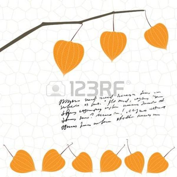 Physalis clipart