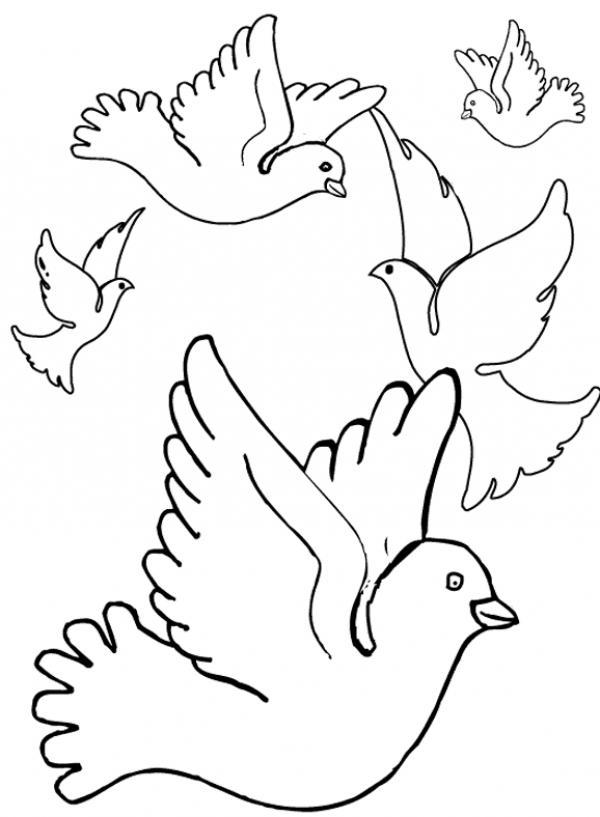 Pidgeons coloring