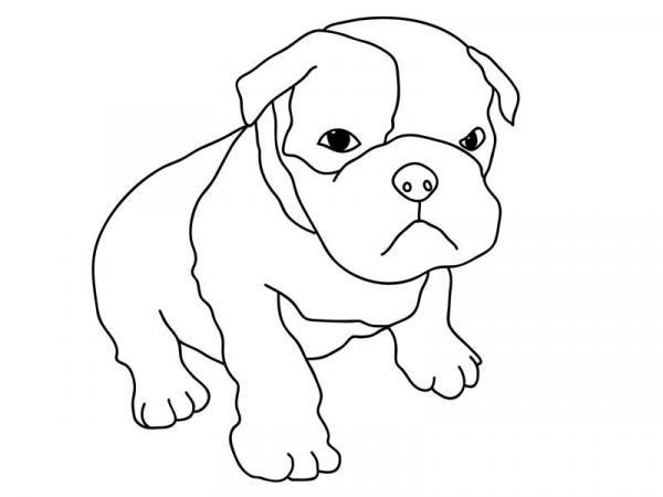 Pitbull Puppy coloring