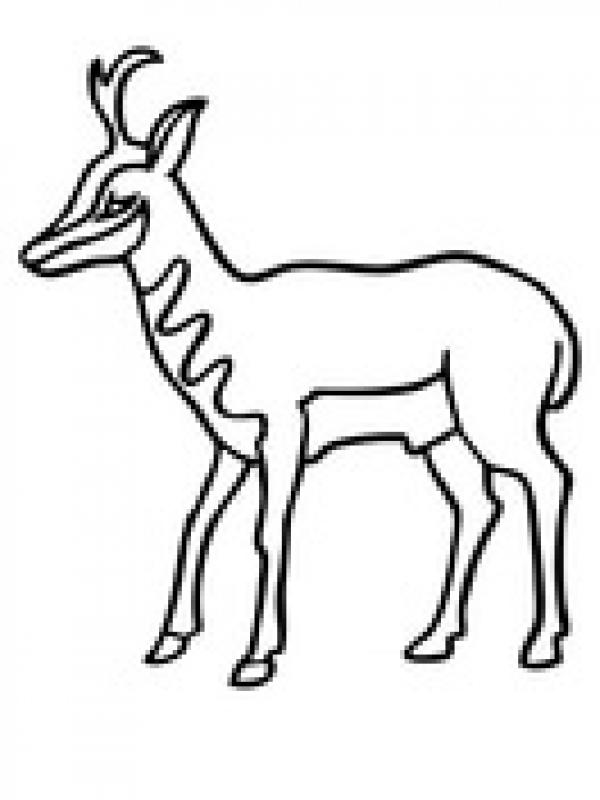 Pronghorns coloring