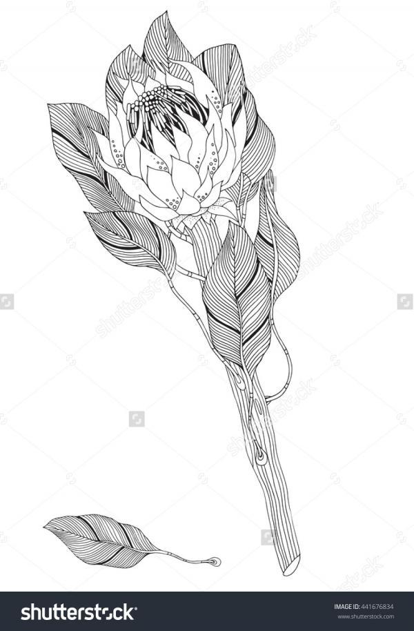 Protea coloring