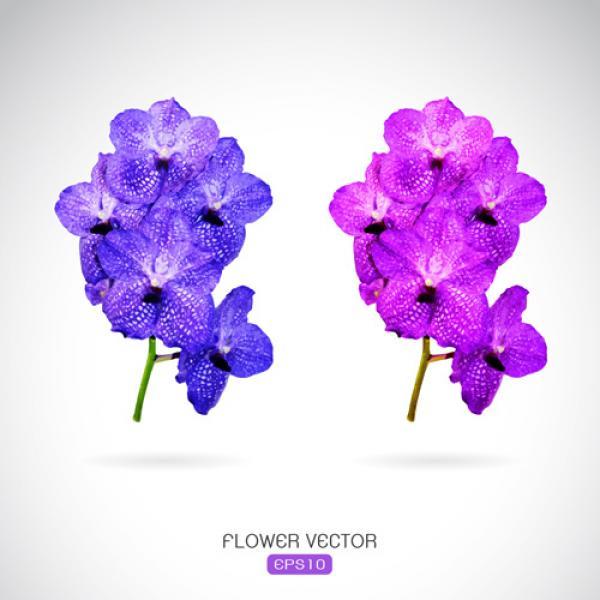 Purple Flower svg