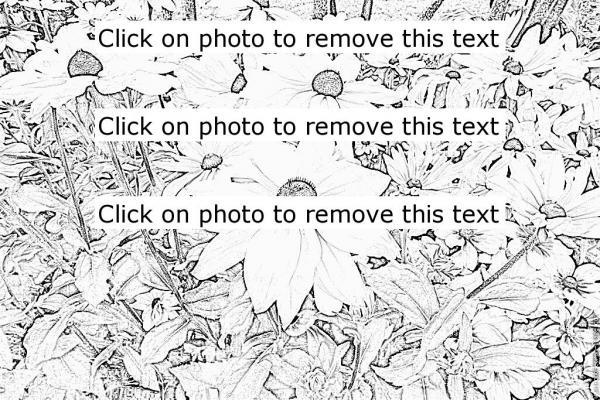 Rudbeckia coloring