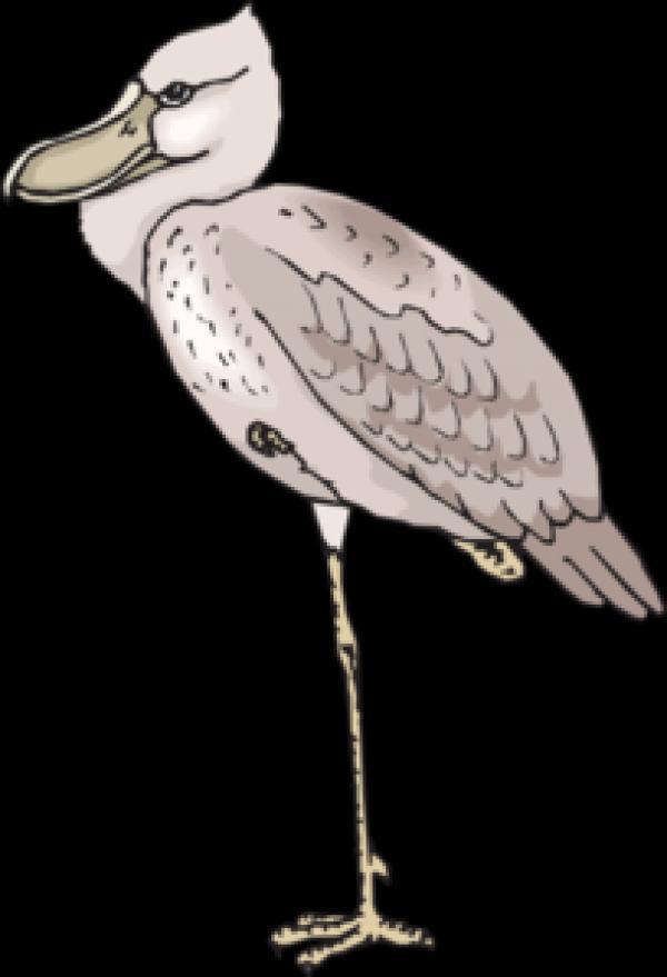 Shoebill clipart
