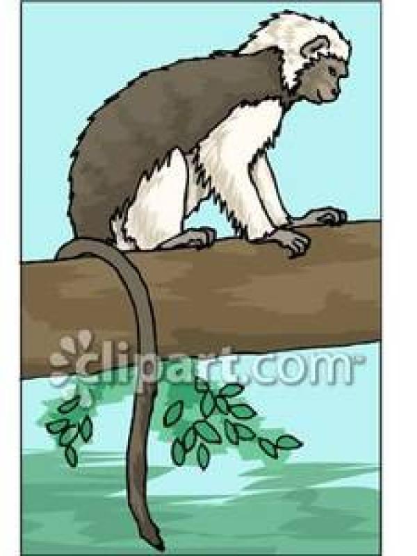 Snow Monkey clipart