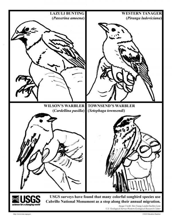 Songbird coloring