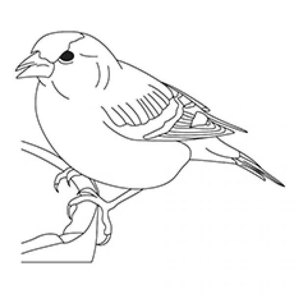 Sparrow coloring