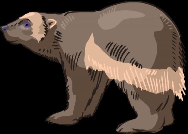 Spectacled Bear clipart