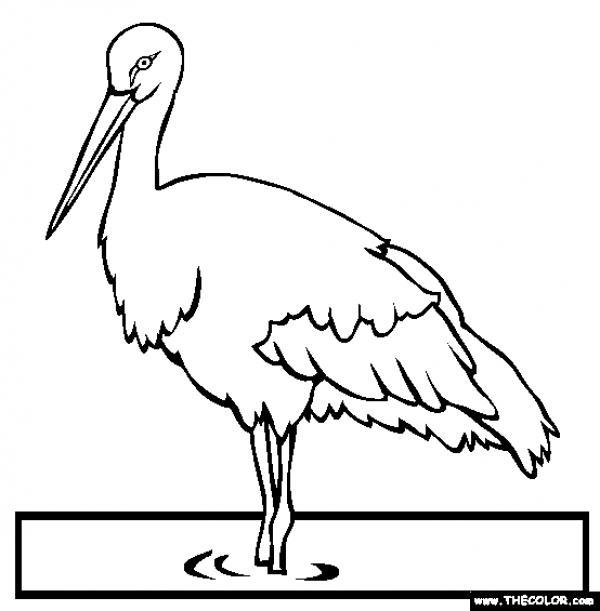 White Stork coloring