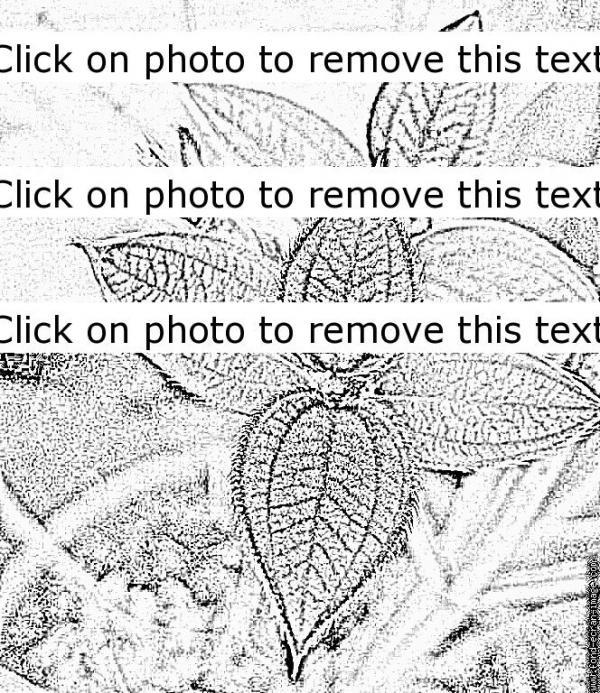 preview Tilia coloring