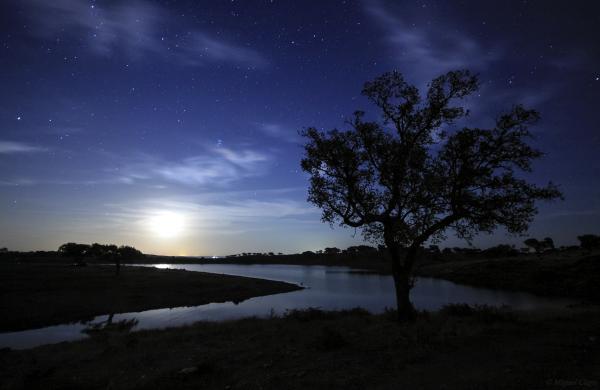 preview Tree In Dark Sky coloring