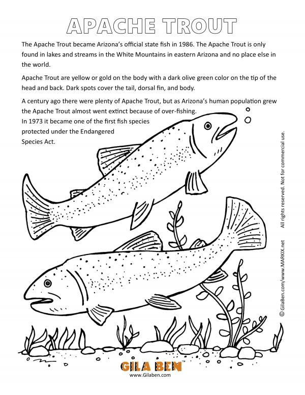 preview Trout coloring