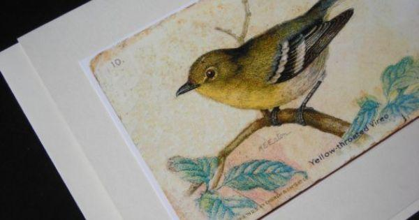 preview Vireo coloring