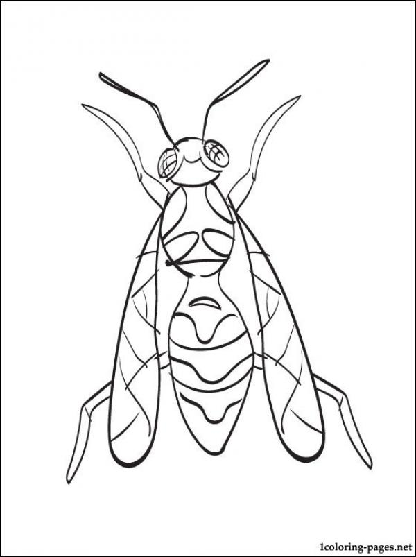 preview Wasp coloring