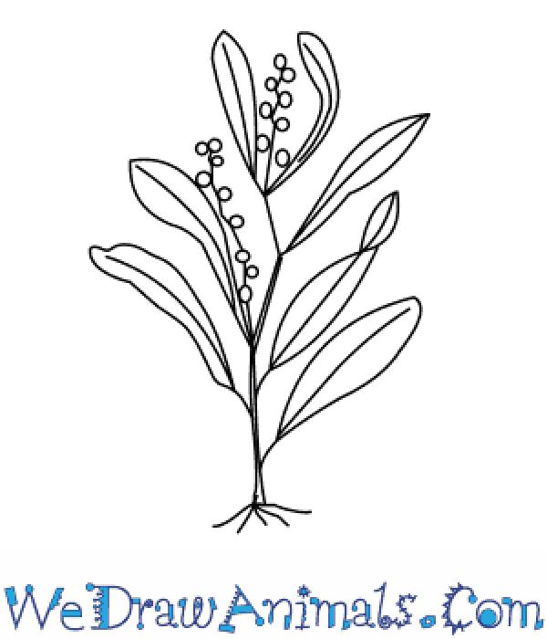 preview Wattle coloring