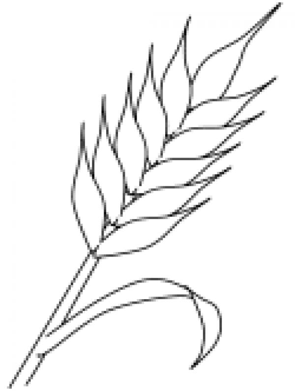 preview Wheat coloring