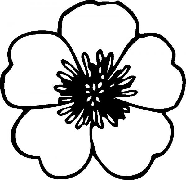 preview White Flower coloring