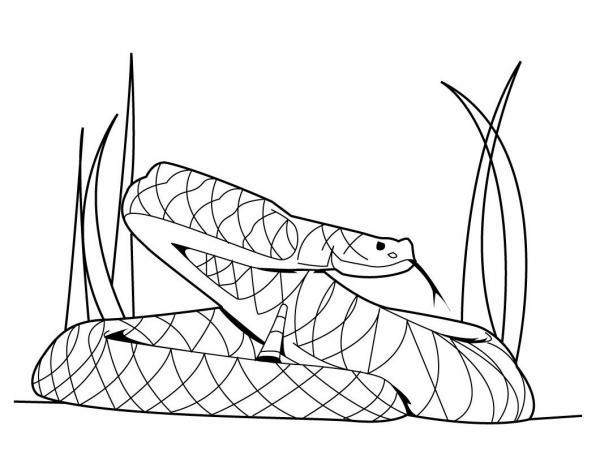 White Python coloring