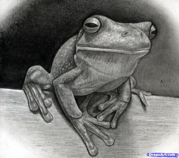 preview White-lipped Tree Frog coloring