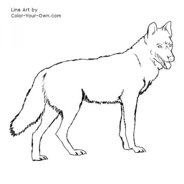preview Wolfdog coloring