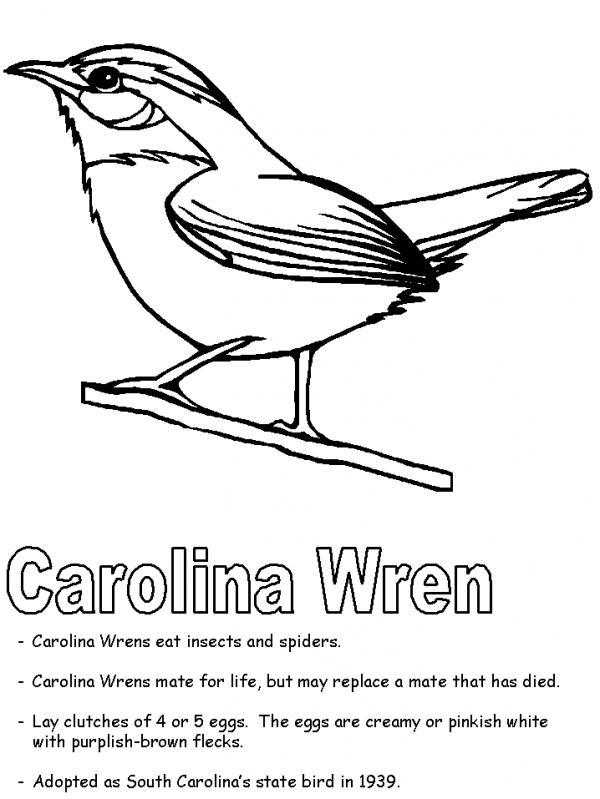 preview Wren coloring