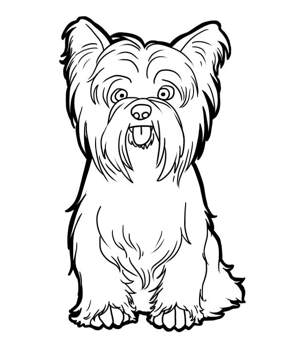 preview Yrokshire Terrier coloring