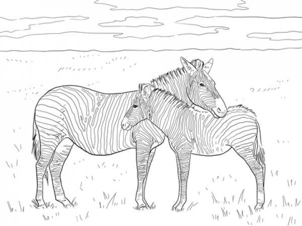 preview Zebra coloring